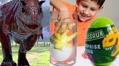 Carnotaurus at the park, dinosaur hatching from egg, dinosaur egg surprise videos. Luca finds at the park mega grow dinosaur egg which hatches in a water aft. Dinosaur Eggs, Dinosaurs, Park, Videos, Parks