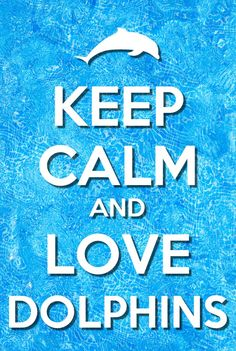 keep calm and love dolphins
