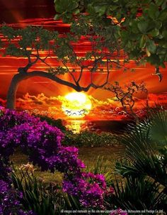 paisagens lindas por do sol - Pesquisa Google