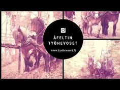 Horse logging with Pläsi and Limppu - YouTube