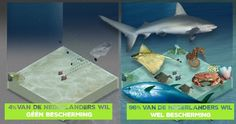 Actual campaign of Greenpeace Netherlands: Protect the North Sea
