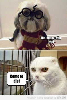 Harry Potter and Voldemort - funny pictures - funny photos - funny images - funny pics - funny quotes - funny animals @ humor Harry Potter Humor, Expecto Patronum Harry Potter, Hogwarts, Funny Memes, Hilarious, It's Funny, Voldemort, Funny Animals, Funniest Animals