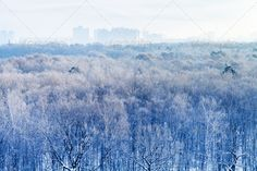 early morning over frozen urban park in winter ...  above, blue, building, cityscape, cloudy, cold, crown, dawn, day, daybreak, exterior, forest, frost, frosty, frozen, haze, hazy, horizon, house, landscape, mist, misty, morning, moscow, natural, nature, outdoors, panorama, park, russia, russian, scene, scenery, scenic, season, sky, skyline, snow, snowbound, snowy, sunrise, trees, urban, view, weather, winter, wood