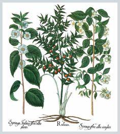 Herbarium (Mega Square) by Parkstone Press - Published August 14, 2010
