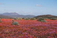 Namaqualand, Namíbia.