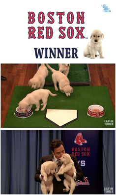 Congrats to the Boston Red Sox! Our puppies predicted you'd win! http://www.youtube.com/watch?v=Wq1X4maWAXA