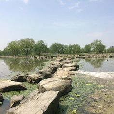 """""""궁남지 宮南地 Gungnam-ji Pond  #부여 #백재 #한국 #池 #扶余 #百済 #韓國 #pond #buyeo #baekjae #korea #เกาหลีใต้"""" Photo taken by @ishideo on Instagram, pinned via the InstaPin iOS App! http://www.instapinapp.com (05/12/2016)"""