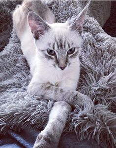 Stealing my friends cat for karma cause Im not even sure how a cat can be so pretty by hans1193 cats kitten catsonweb cute adorable funny sleepy animals nature kitty cutie ca