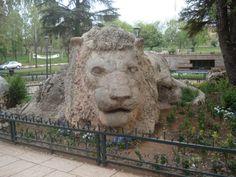le lion d'ifrane maroc
