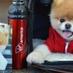 Boo the pomeranian, named the cutest dog in the world, has become an ambassador for Virgin America. Already a worldwide star with his own book deal. Pomeranian Facts, Baby Pomeranian, Puppy Care, Pet Puppy, Pet Care, Baby Animals, Cute Animals, Virgin America, World Cutest Dog