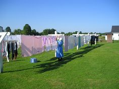 Here's a beautiful picture of an #Amish woman hanging the laundry in #AmishCountry #LaundryontheClothesline #AmishChores #VisitAmishCountry