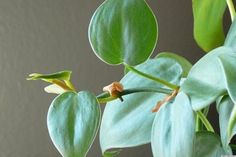 10 Best Houseplants To Purify The Air