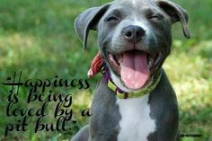 Happiness is being loved by a Pitbull! #dogs #pets #Pitbulls  facebook.com/sodoggonefunny
