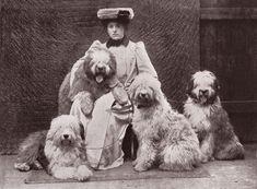 Old English Sheepdog Edwardian Lady & Dogs Old Image On Dog Greetings Note Card #JustDogs,Yipee!