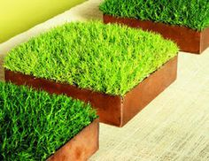 How to grow moss... Think I've seen more complex methods, but simple sounds good to me! It can be so pretty!