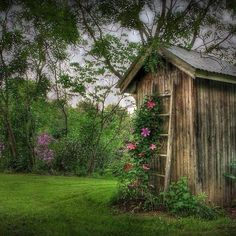 Wood shed and flowers