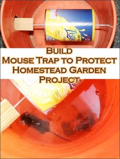 "Build Mouse Trap to Protect Homestead Garden Project Homesteading  - The Homestead Survival .Com     ""Please Share This Pin"""