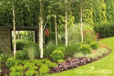 European Garden, Garden Screening, Modern Landscaping, Garden Trees, Garden Inspiration, Outdoor Structures, Outdoor Living, Grass, Birches