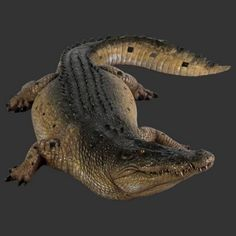 Crocodile 12ft Realistic Life Size Model - Lize Size Models