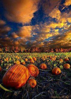 Fall & Thanksgiving (~~Pumpkin Crossing ~ Horizon series, autumn in Wisconsin by Phil-Koch~~) Beautiful Places, Beautiful Pictures, Fall Pictures, Pumpkin Pictures, Fall Images, Halloween Pictures, All Nature, Belle Photo, Fall Halloween