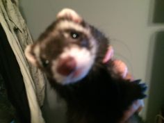 Squishy Lucy. She is being wiggly. Sorry pic is a little blurry