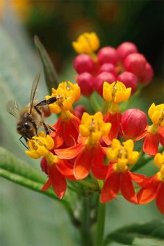 CLOSEUP OF BEE ON FLOWERS