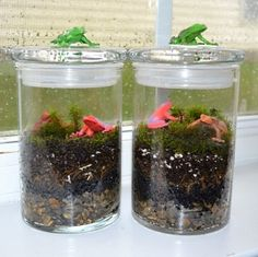 Toddler Science: Create a terrarium with a plastic soda bottle. A great Green Project for kids!