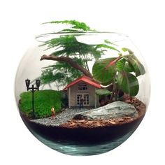 Terrarium The Date