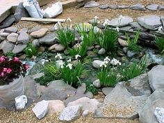 See photos of my pond collapse and rebuild of my pond. Pond Plants, Water Garden, See Photo, Iris, Bloom, Gardens, Garden Landscaping, Water Gardens, Bearded Iris