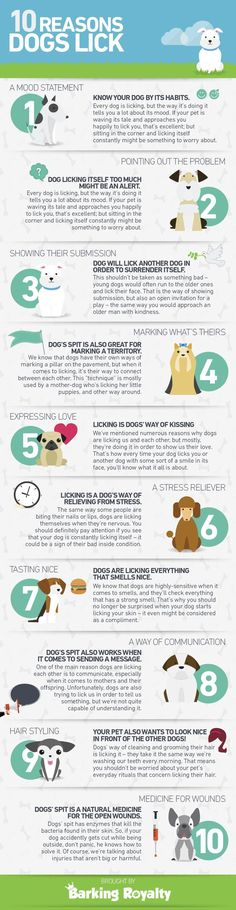 Why do dogs lick? Here's a helpful infographic.