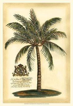 British Colonial Palm III Art Print