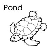 Pond Life Coloring Page  Coloring Preschool and tyxgb76ajthis