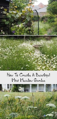 Meadow garden ideas and plants for small gardens or backyards Gardening Books, Gardening Tips, Chamomile Lawn, Plants For Small Gardens, Garden Tools, Garden Ideas, Meadow Garden, Wildflower Seeds, Grass Seed