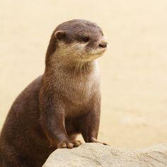 otters :) My favorite animals!!