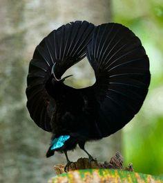 Bird of Paradise Ain't I cool? Más