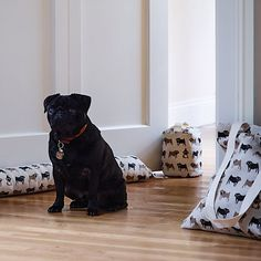For any dog lovers, this lovable pug and dog collection from Fenella Smith will make your heart melt.