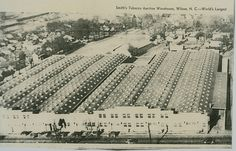 Eastern North Carolina farmers took their cured tobacco to warehouses such as this to sell at auction. This one is in Wilson, but similar warehouses were all over NC in towns such as Greenville, Kinston, Rocky Mount, etc. Smith's Tobacco Auction Warehouse (world's largest) by ilovecats1961, via Flickr