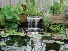 Contemporary above ground koi pond water garden with bog for Pond veggie filter