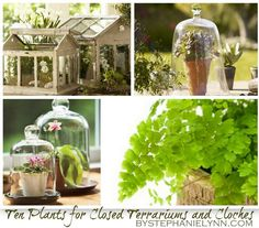 a list of some great houseplants that thrive well in the high humidity conditions created with closed terrariums and large glass cloches
