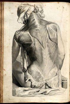 "Govard Bidloo (1649-1713) [anatomist pinterest.com/pin/287386019943689954/] Gérard de Lairesse (1640-1711) [artist] ""Anatomia Humani Corporis"" (pinterest.com/pin/287386019946892391/)."