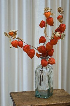 Chinese Lantern flowers centerpiece - Andrew likes these instead of pine cones...I have a feeling they are pricey...but just an idea...