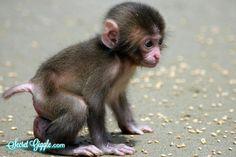 cute-baby-animals-12.jpg 500×333 pixels