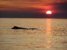 Eco Beach Resort: Whale watching at sunset Broome Western Australia Continent, Tropic Of Capricorn, What A Beautiful World, Whale Watching, Sunrises, Heavens, Western Australia, Beach Resorts, Paint Ideas