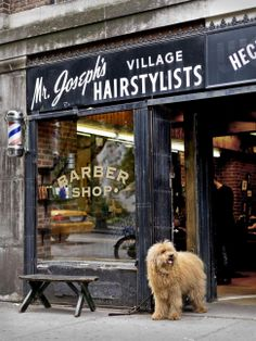 Floyd, an 8-month-old Labradoodle puppy, waits outside a barber shop in the West Village