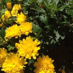 Sunny!  #flowers #nature #sunnyday #sunny☀️