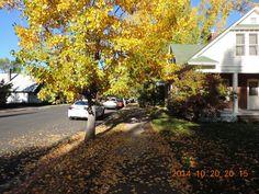 Beautiful fall colors in Flagstaff, Arizona