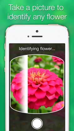 Like That Garden app – Flower Identification