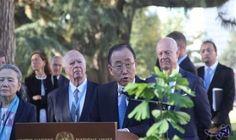 بان كي مون يزرع شجرة من هيروشيما…: قام الأمين العام للأمم المتحدة بان كي مون اليوم الإثنين، بزرع شجرة من هيروشيما تنتمي إلى الجيل الثاني في…