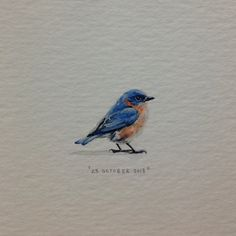 """Day 297 : """"Somewhere there's a bluebird of happiness."""" - Jan Peerce."""
