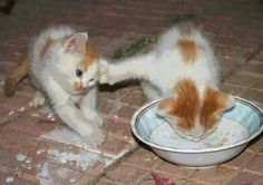 Go away! This is my milk. *